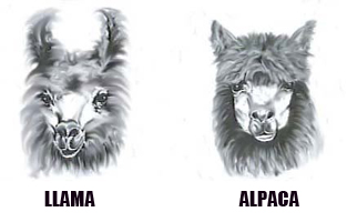 llama or alpaca differences